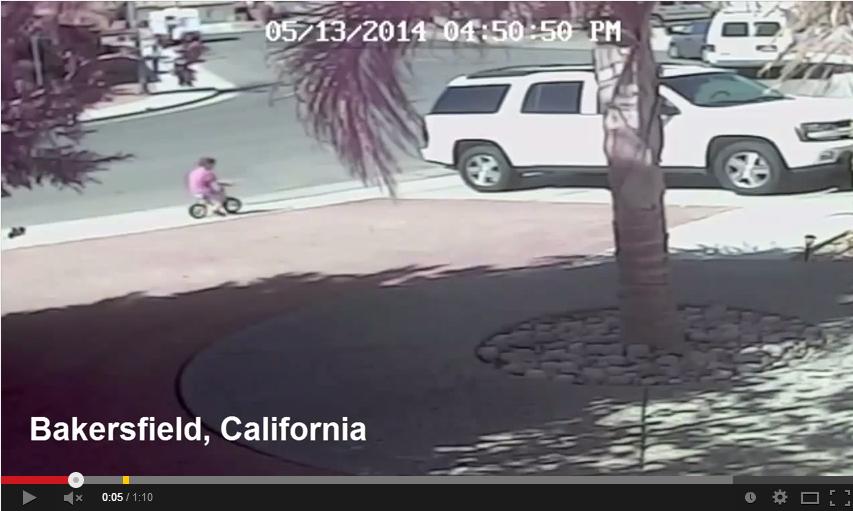 Bambino salvato da un gatto dall'attacco di un cane video youtube