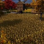 TG3_GrainField-Autumn.jpg