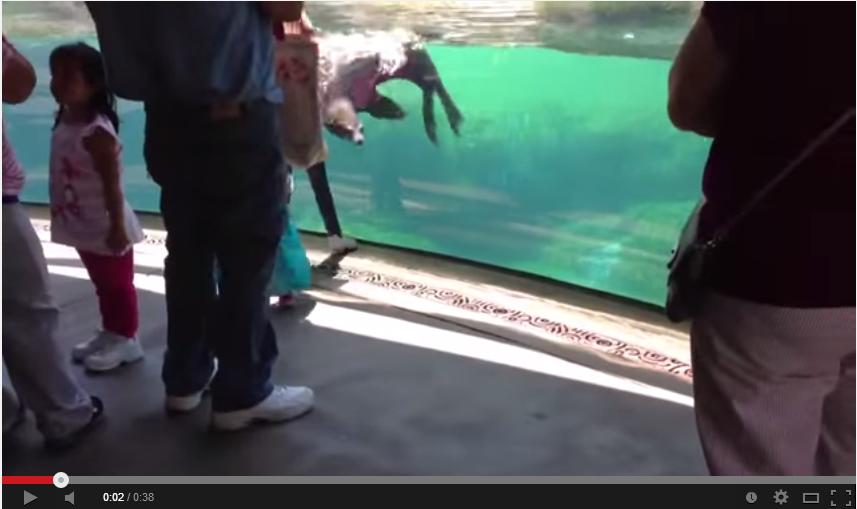 Leone marino si preoccupa per la bambina caduta video youtube