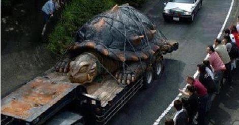 Tartaruga gigante alle falde dell'Etna in Sicilia lunga 5 m