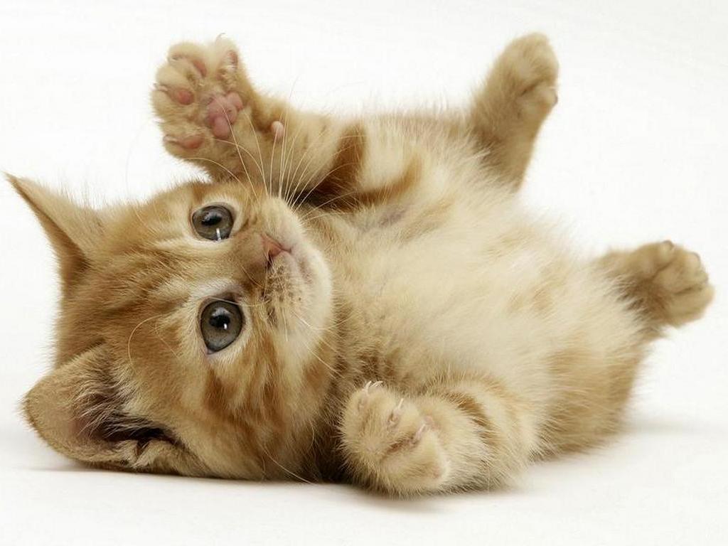 divertente video youtube sui gatti